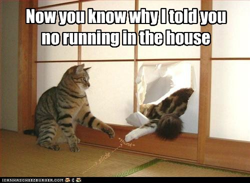cat,house,accident,funny