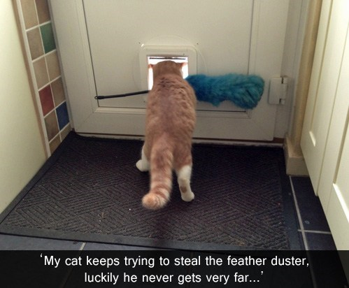 cat door steal dumb Cats