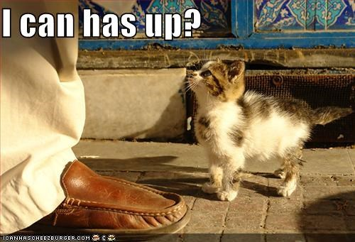 cute,hoomin,i can has,kitten,lolcats,lolkittehs,up