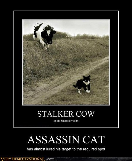cat wtf cow assassin