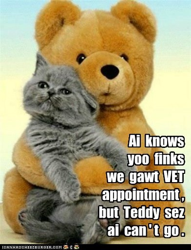 cat teddy bear stuffed animal kitten bear kitty funny - 6972363008