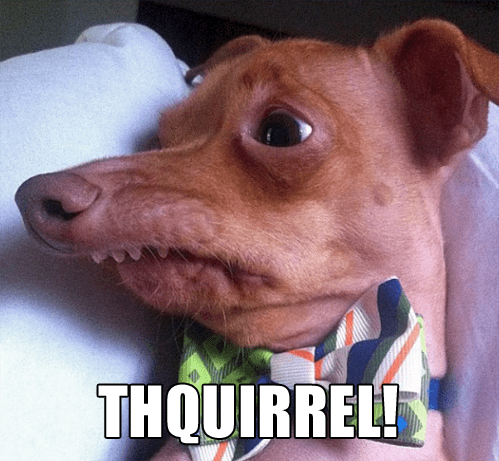 squirrel nose lisp derp - 6972496128
