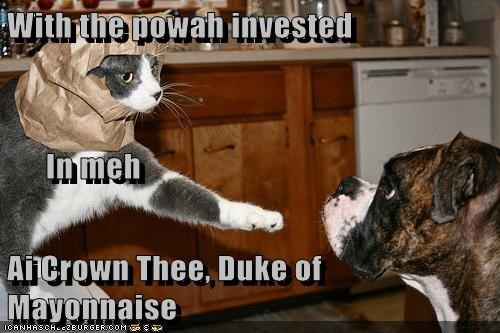 duke cat war dogs knight funny