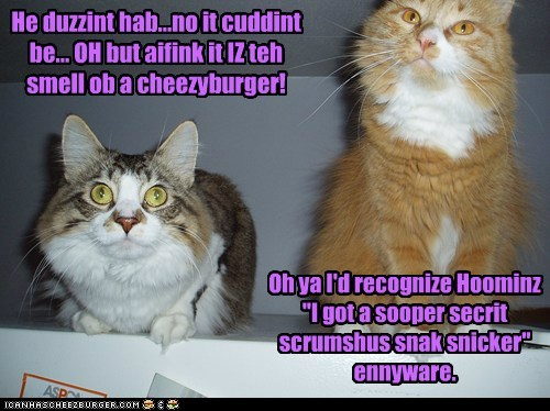 Cheezburger Image 6972820480