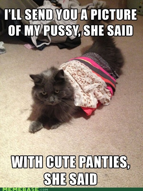 pics that sounds naughty Cats - 6972920320