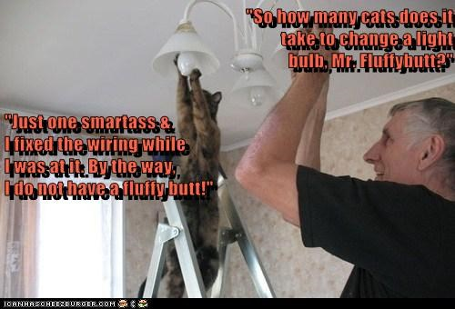 """""""So how many cats does it take to change a light bulb, Mr. Fluffybutt?"""" """"Just one smartass &"""