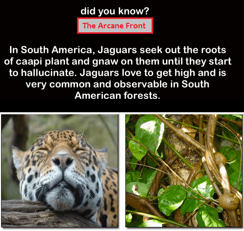 jaguars drugs caapi plant hallucinating animals