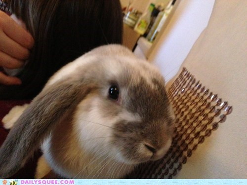 Bunday reader squee rabbit bunny squee
