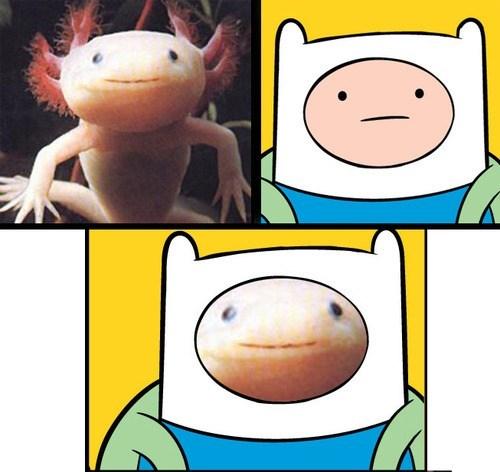 amphibian axolotl TLL finn adventure time - 6973311744