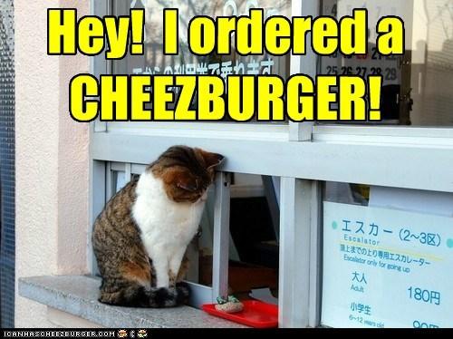 Cheezburger Image 6973932544