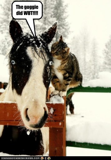 tattling source rumors goggie lying whispering horses Cats