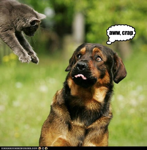 oh no incoming dogs attack what breed Cats - 6974775040