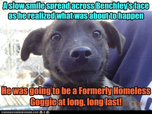 dogs puppies homeless adopted happy dog what breed rescue - 6974782464
