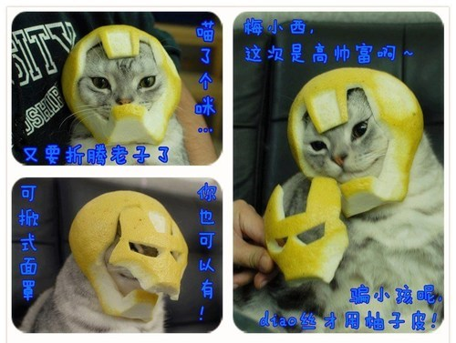grapefruit,wtf,helmet,iron man,Japan,Cats,fruit