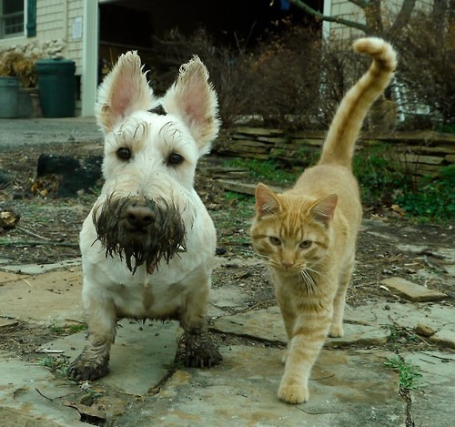 dogs,friends,mud,kittehs r owr friends,what breed,dirty,Cats