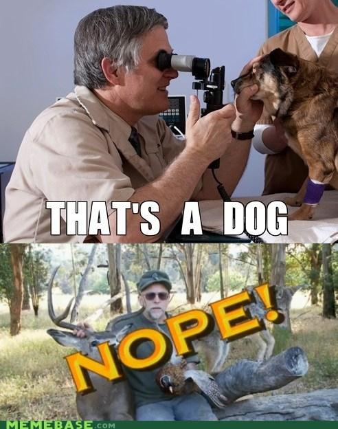 Chuck Testa re-frames dogs - 6975038464
