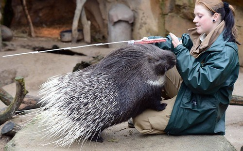 porcupine measuring zoo spines squee spree squee