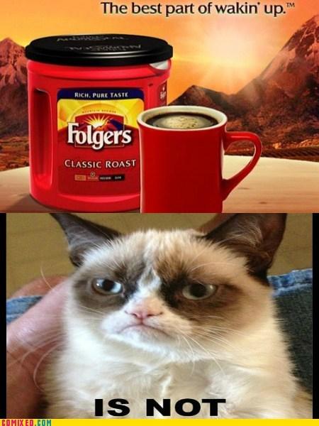 coffee folgers Grumpy Cat sleeping - 6975267328