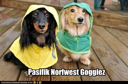 dogs pacific northwest raincoats raining umbrellas dachshunds