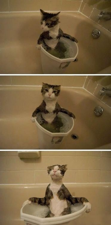 relaxing,water,tub,bath,Cats