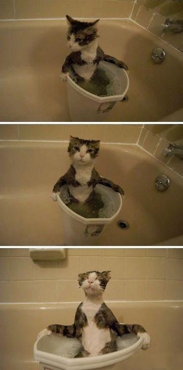 relaxing water tub bath Cats - 6975401728