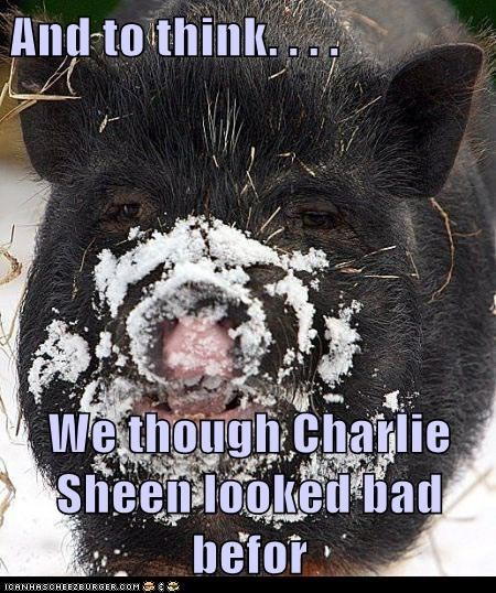 bad,snow,coke,pig,Charlie Sheen