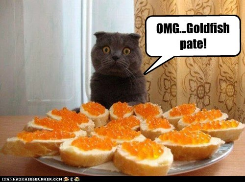 cat,goldfish,caviar,food,pate,funny
