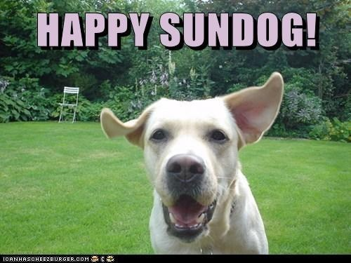 dogs happy sundog running back yard smiling dog Sundog what breed - 6975625472