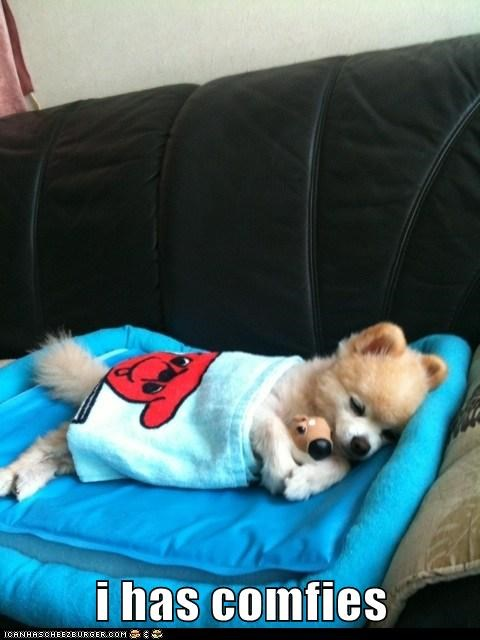 pomeranian dogs stuffed animal Fluffy couch comfy cuddles - 6975658240
