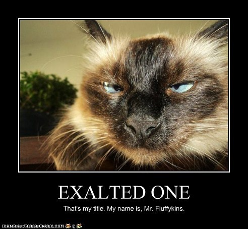 cat,ruler,demotivational,exalted,funny