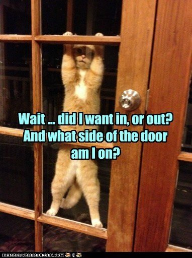door,cat,inside,outside,funny