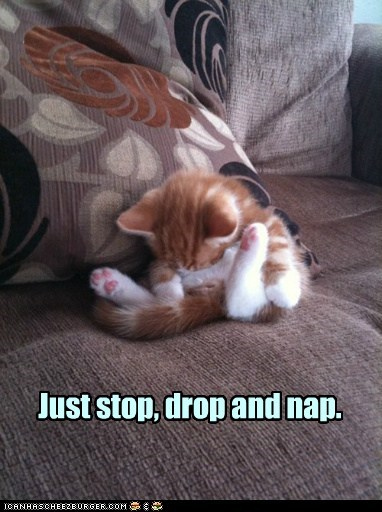 Just stop, drop and nap.