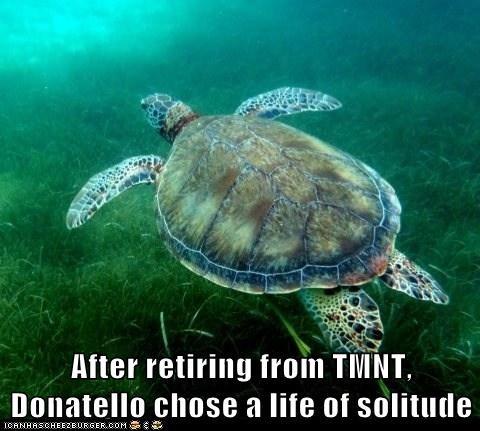 solitude TMNT turtles swimming retired teenage mutant ninja turles alone