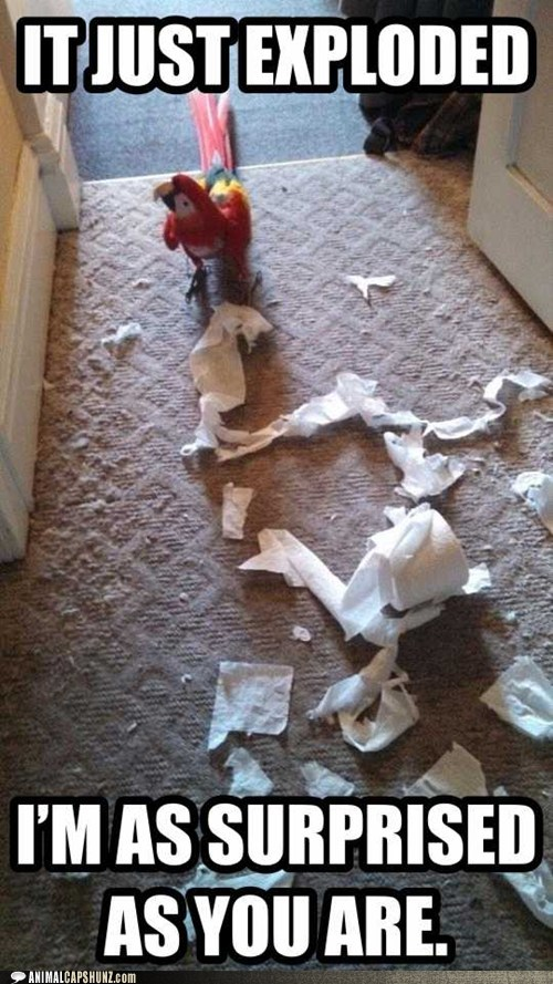 surprised parrots exploded lying toilet paper - 6976436224
