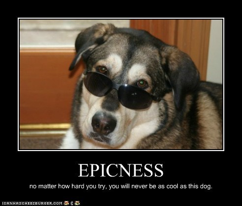 EPICNESS no matter how hard you try, you will never be as cool as this dog.