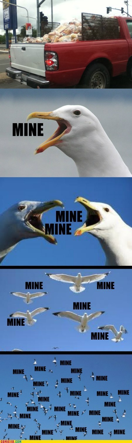 birds mine seagulls bread finding nemo - 6977008384