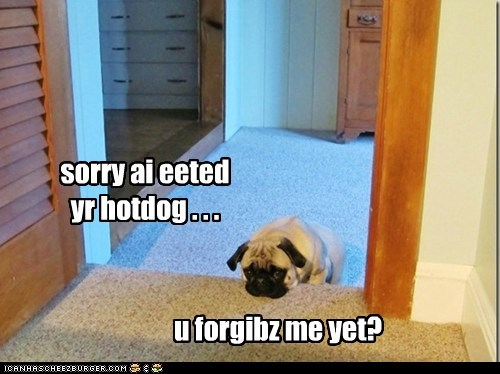 hotdog,eated it,dogs,pug,sad dog,sorry,forgive me,guilty