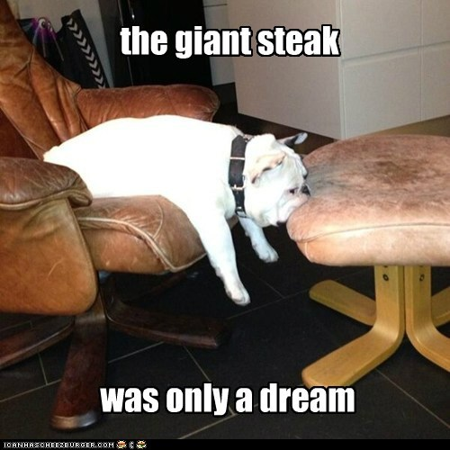 chair steak dogs dream bulldog leather just a dream