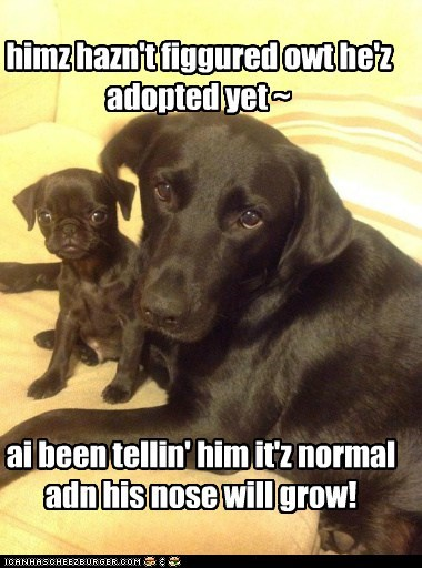 himz hazn't figgured owt he'z adopted yet ~ ai been tellin' him it'z normal adn his nose will grow!