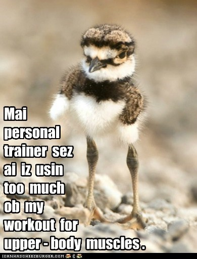 birds,personal trainer,exercising,muscles,too much,legs,working out