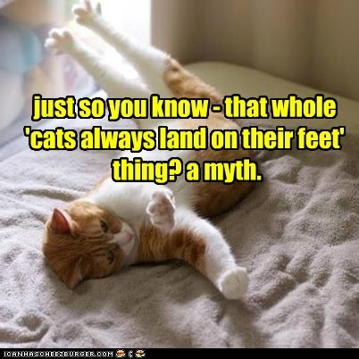 just so you know - that whole 'cats always land on their feet' thing? a myth.
