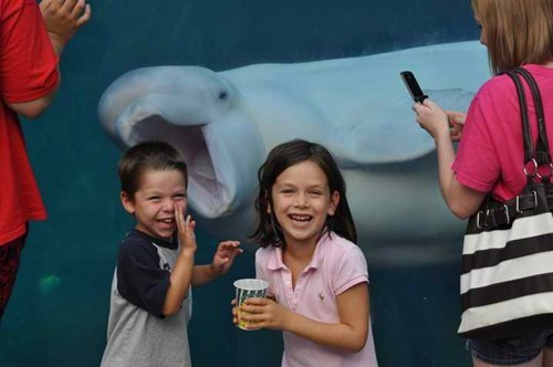 photobomb kids beluga whale aquarium picture Photo children