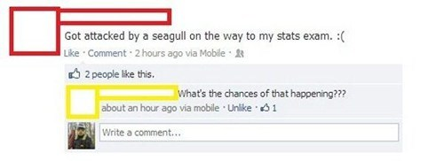 school,seagull,Statistics,chances