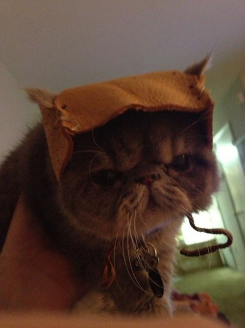 cosplay star wars How To ewok Cats craft hat - 6977423360