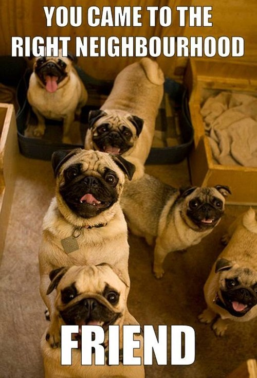 fun,dogs,neighborhood,pugs,friend