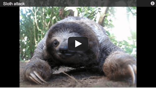 run chase slow Video sloth people pets - 6977795072