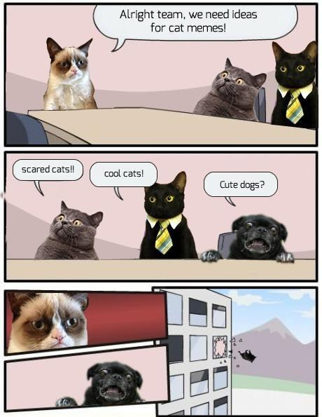 Memes outlook oust Cats animals - 6977881600