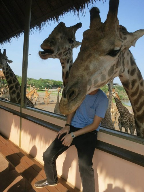long face,zoo,giraffes