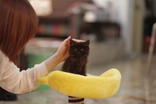 basement cat cyoot kitteh of teh day pet pedestal Cats - 6978138624