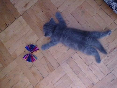 cyoot kitteh of teh day lay done lazy kitten play - 6978144000
